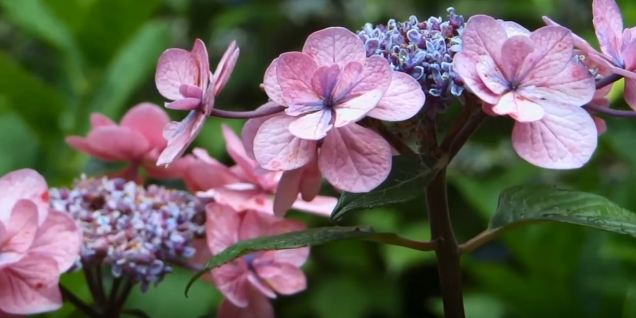 tropical flowering plants
