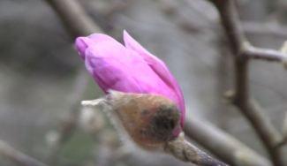 winter flowering plants for pennsylvania