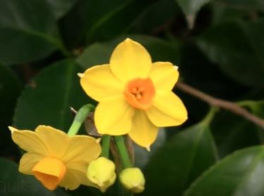 winter flowering plants for window boxes