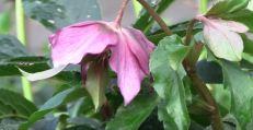 winter flowering plants indoors