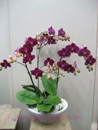 indoor orchids