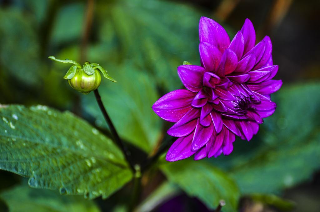 exoctic-flower