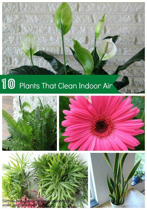 house-plants-clean-air