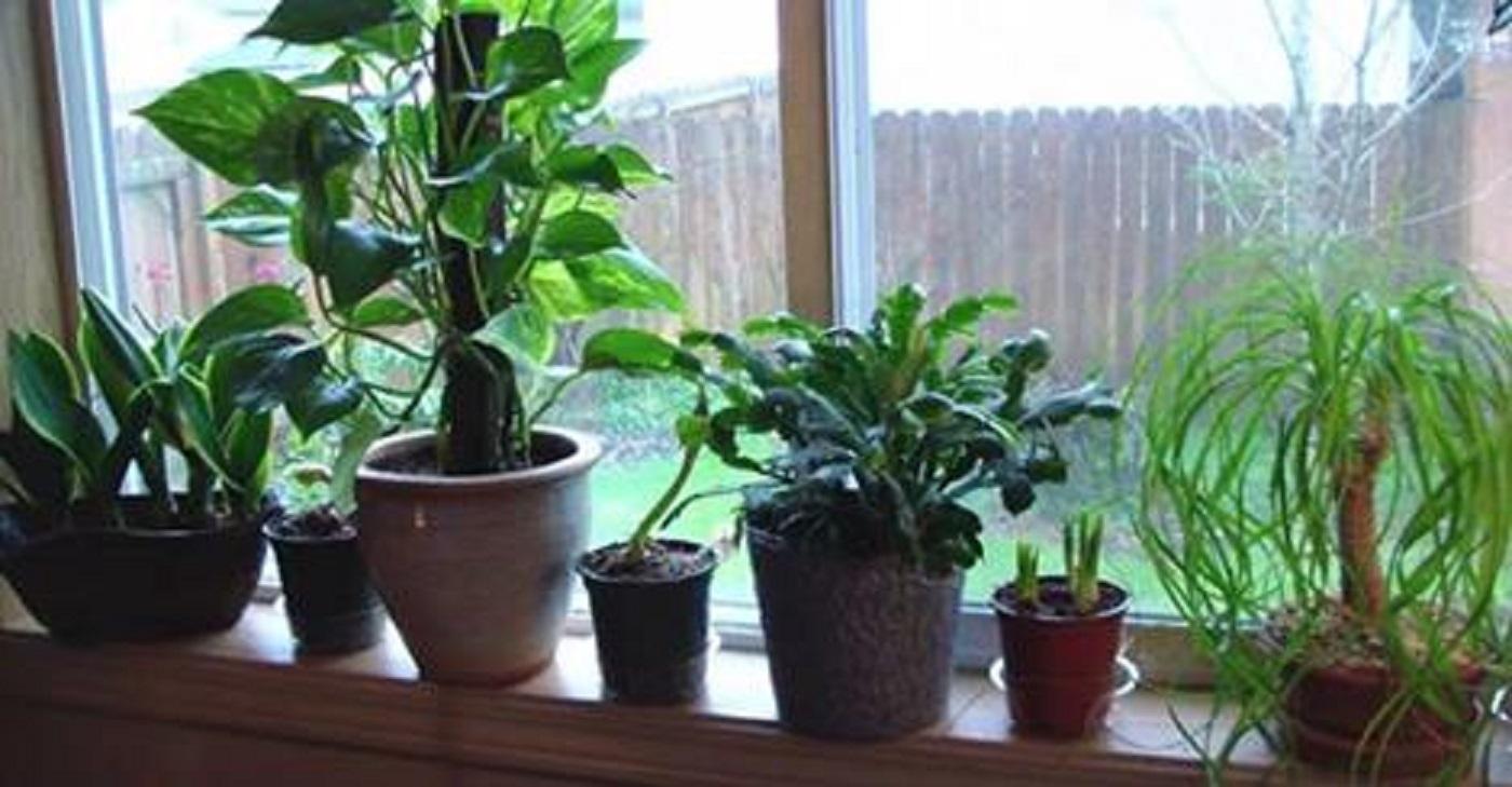 house-plants-that-clean-the-air