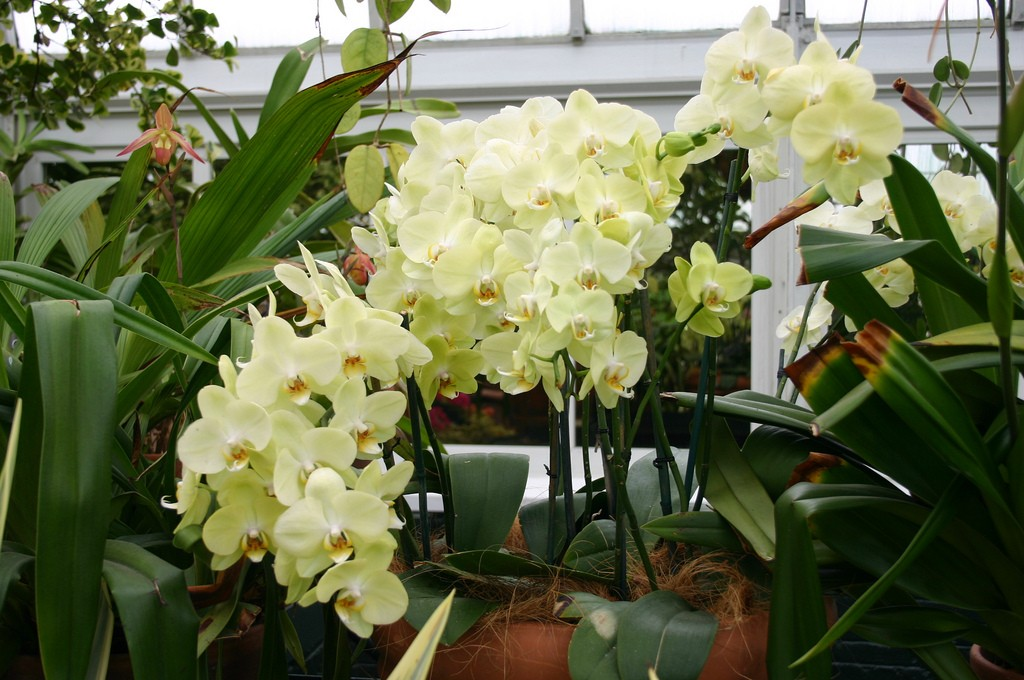 how-to-take-care-of-orchid-flowers
