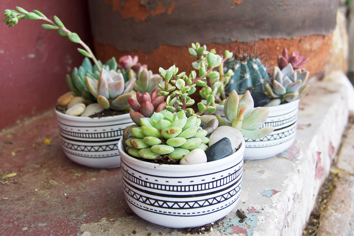 mini-succulents