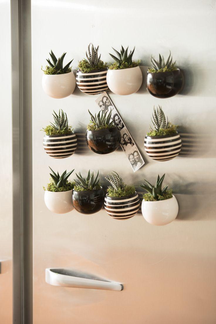 miniature-cactus-plants