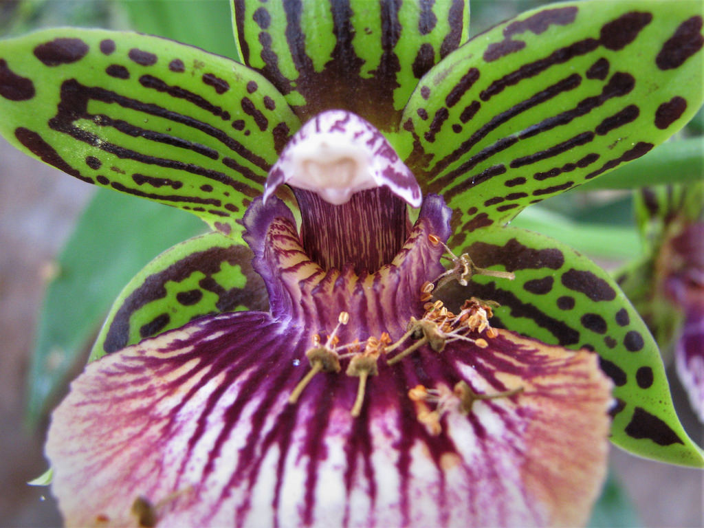 orchid-indoor