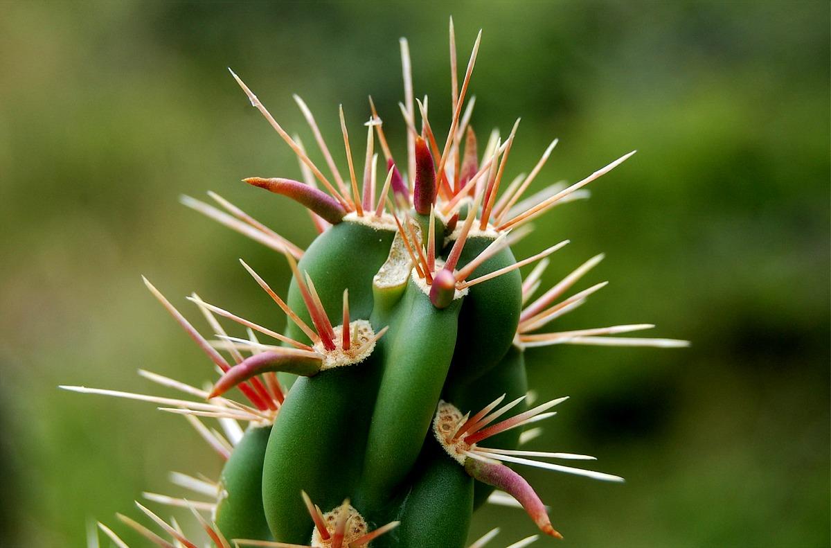plants-cacti