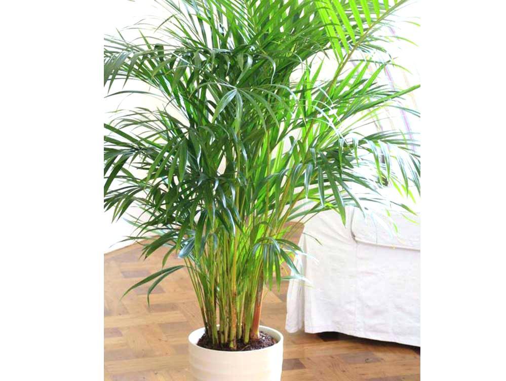 plants-clean-air