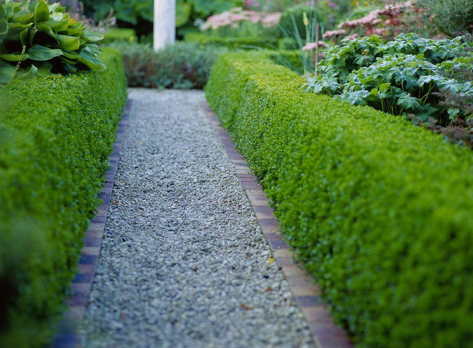 plants-to-make-a-hedge