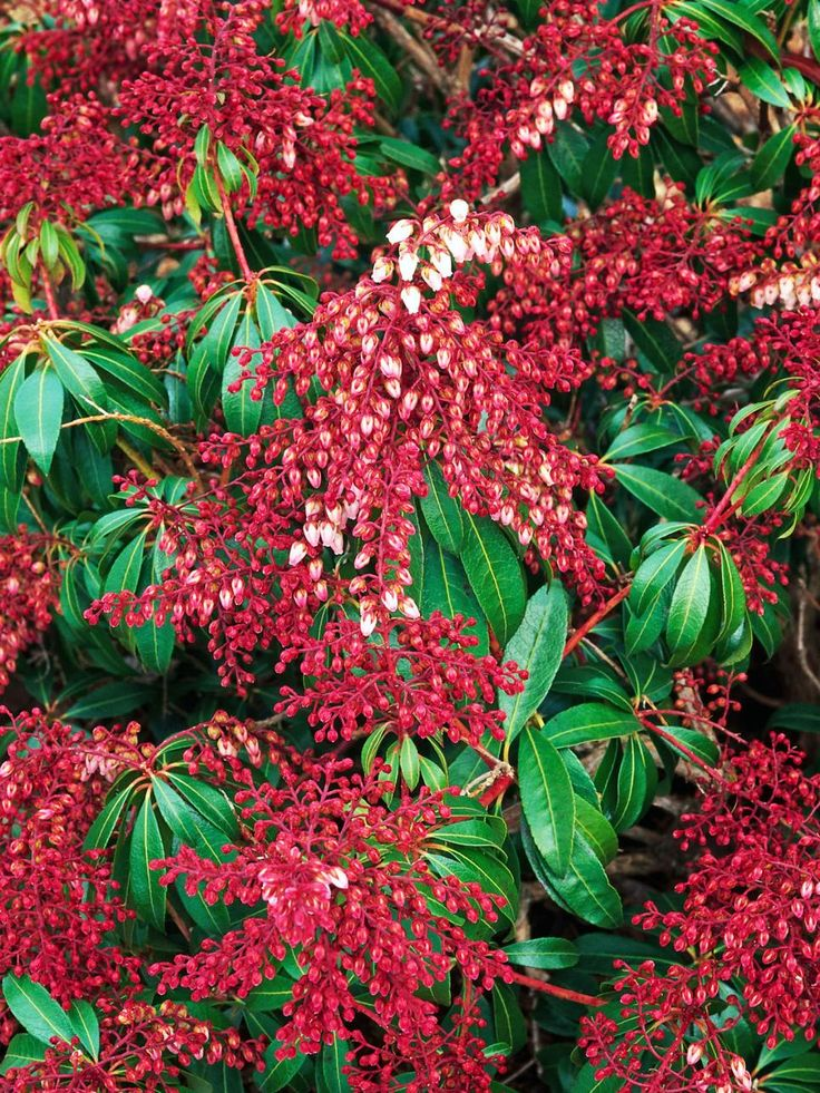 shade-flowering-plants