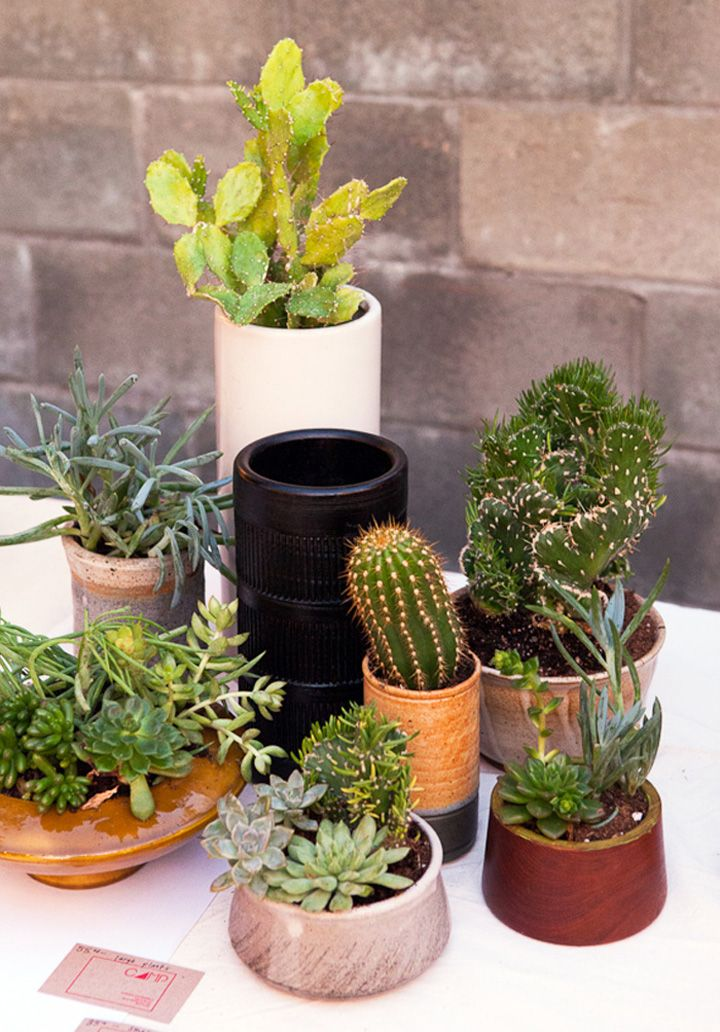 small-cactus-plants-for-indoors
