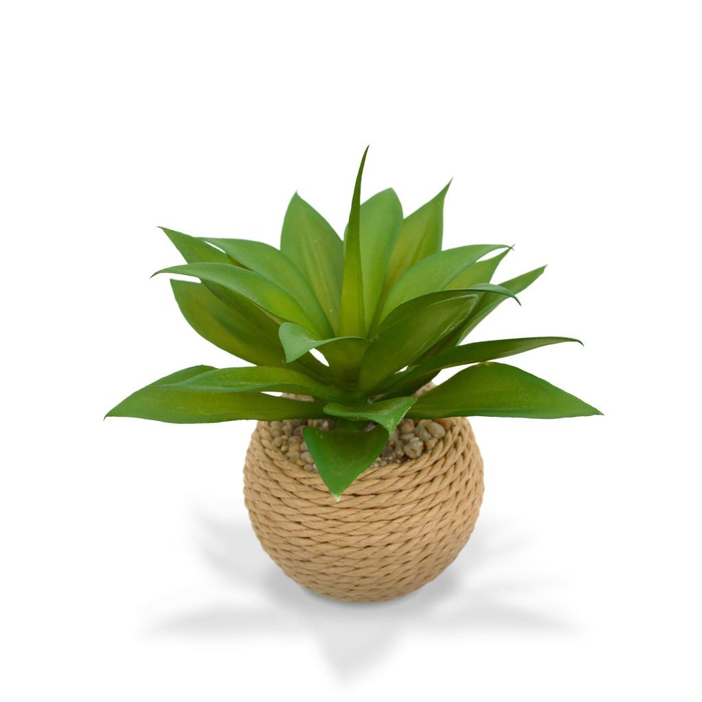 small-plants