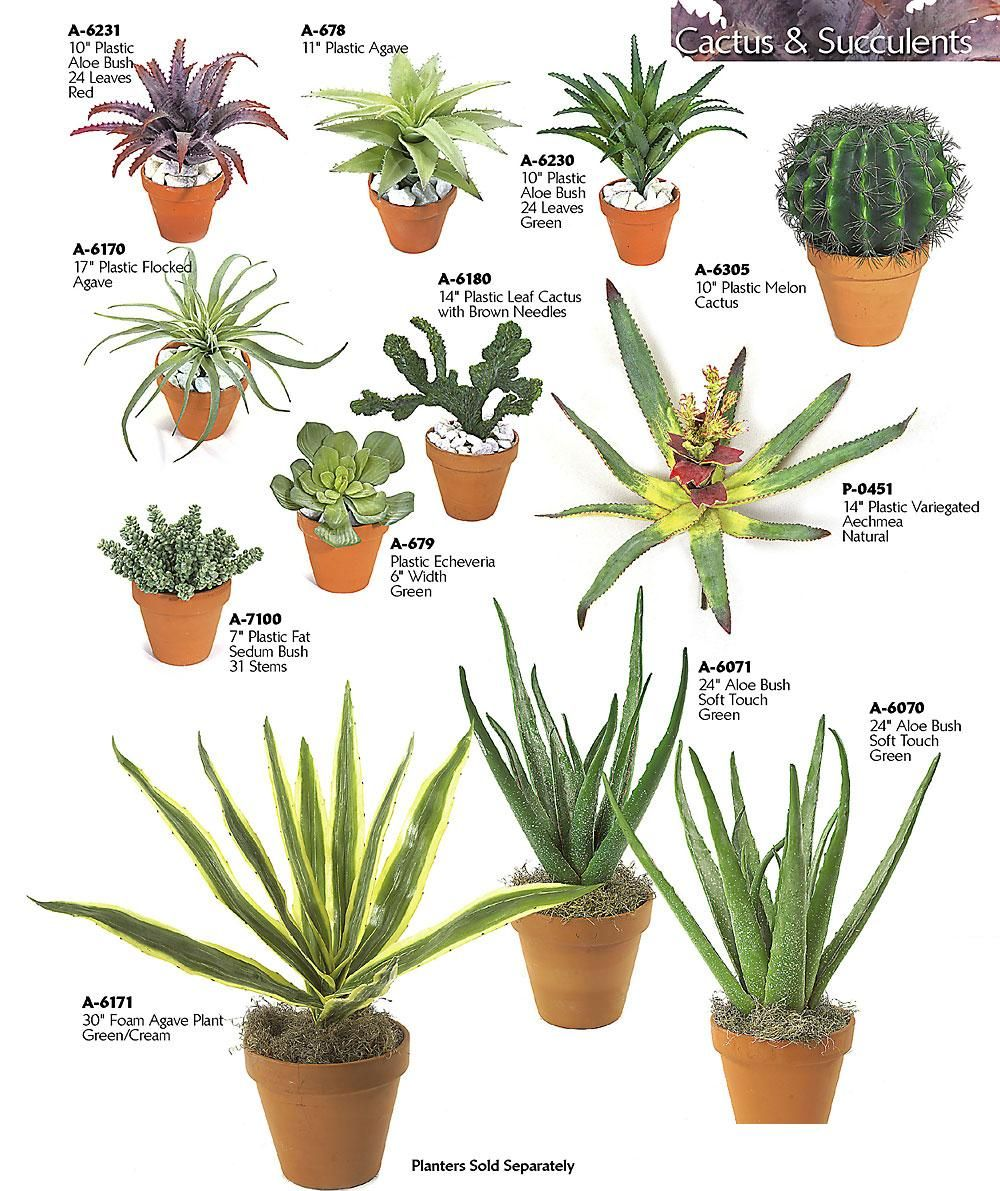 succulent-house-plant