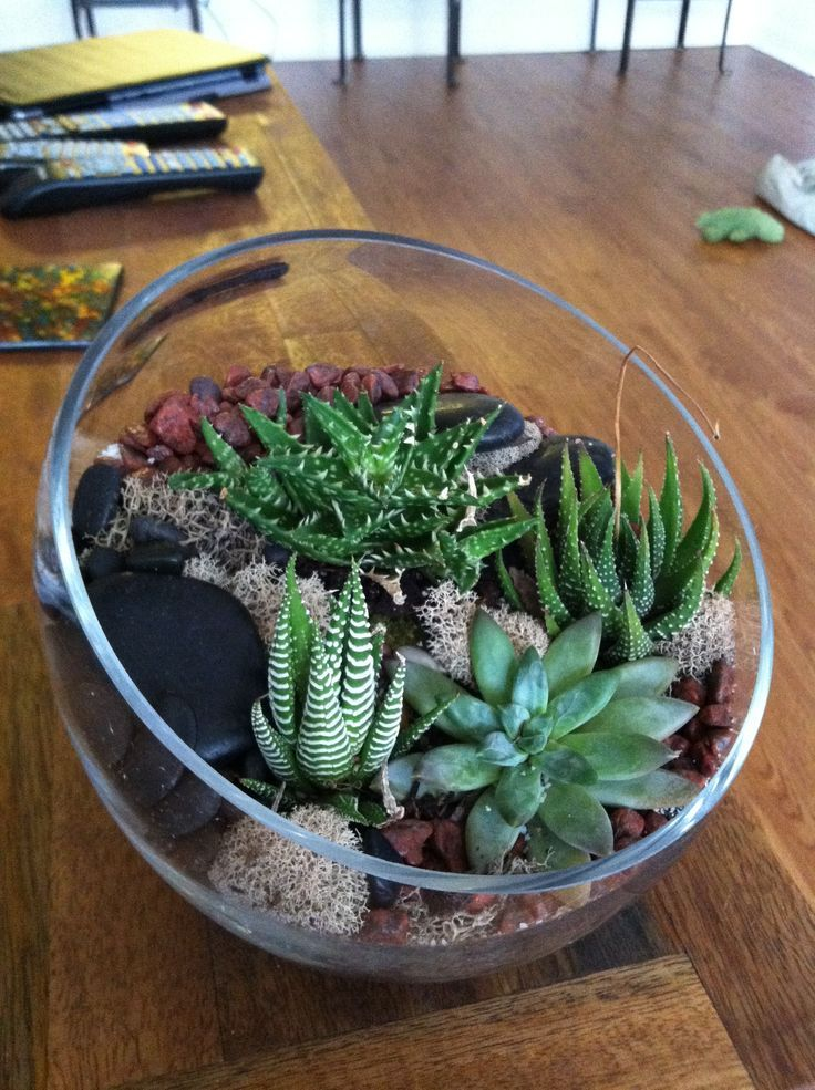 succulent-mini-cactus