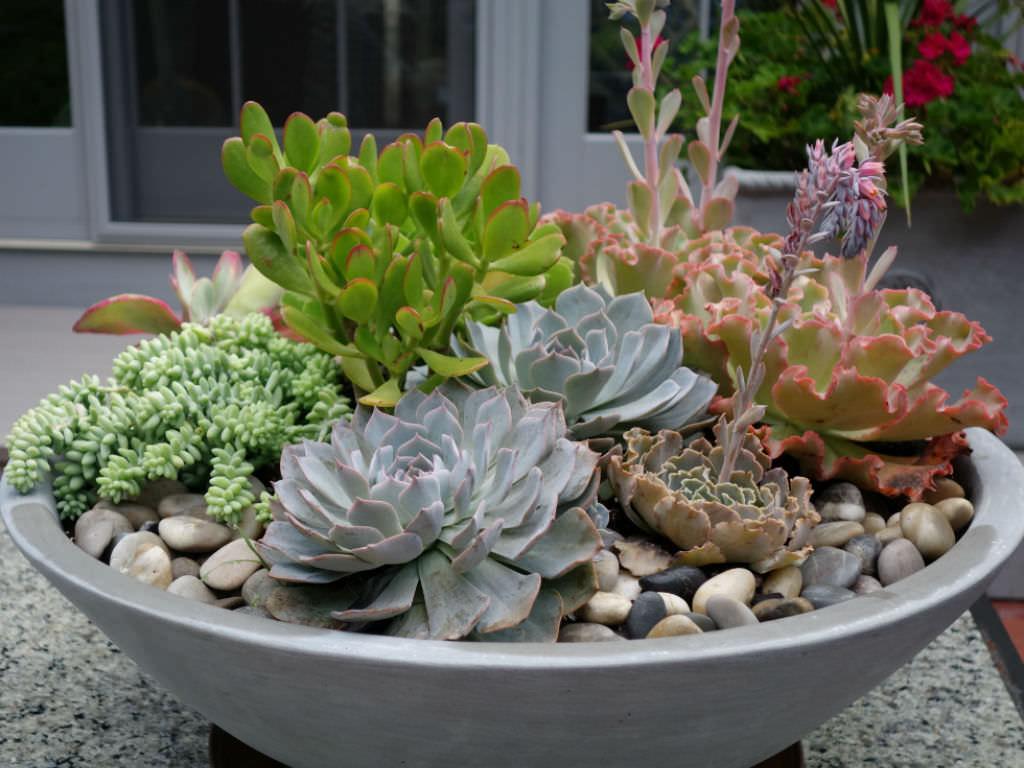 succulent-plant-succulent-flowers