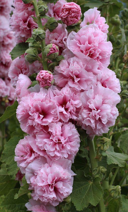 zone-6-flowers