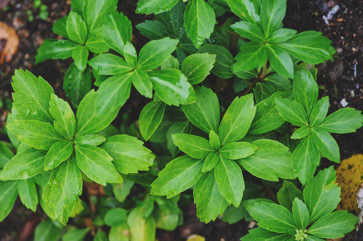 zone-8-plants