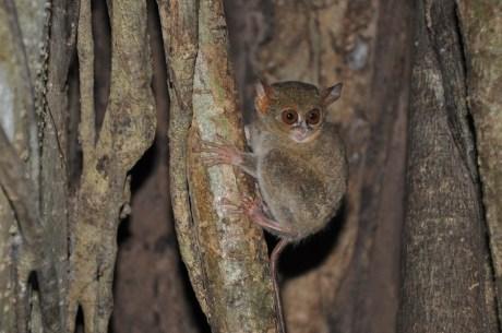 Eco Tours Sulawesi