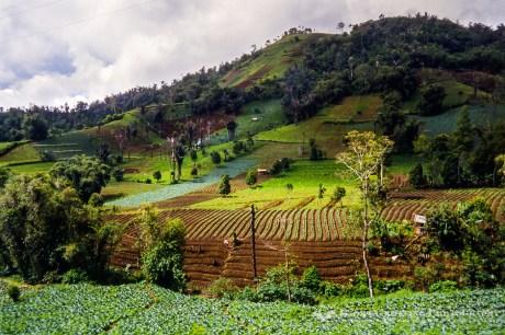 Mt. Mahawu Farmland