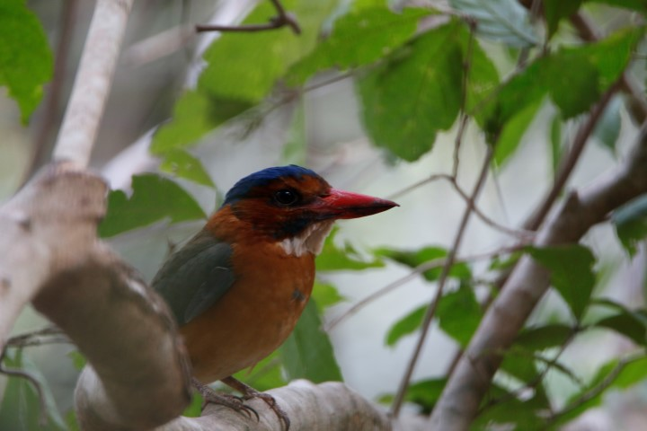 Tomohon Nature, Birdwatching Tangkoko, Dumoga Bone
