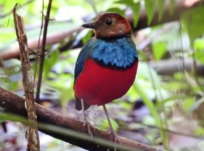 BirdWatching Tangkoko