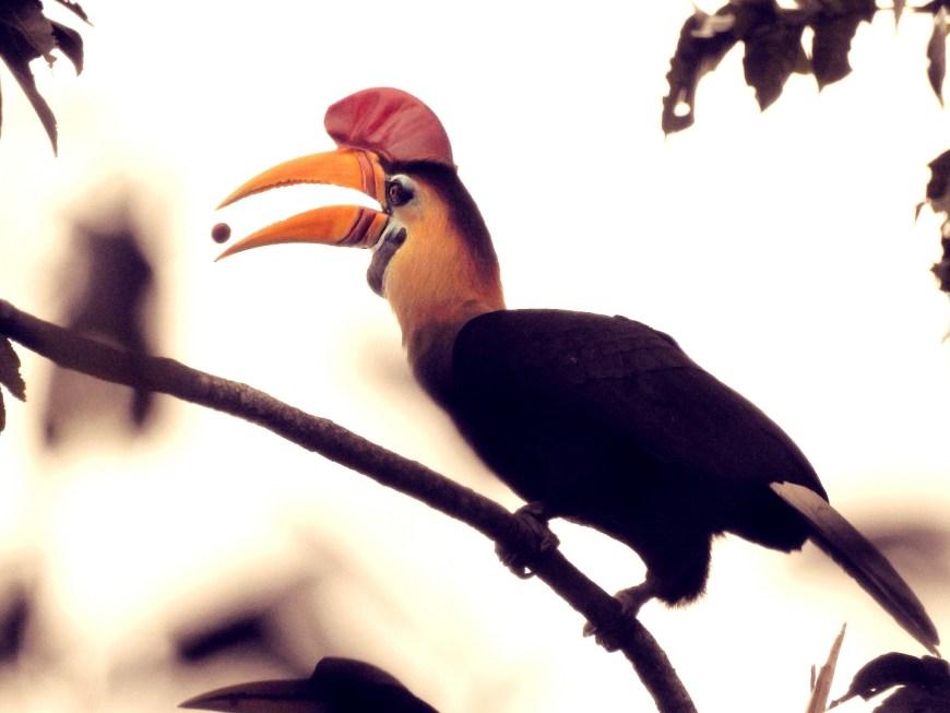 Tangkoko Nature Reserve, Dumoga Bone