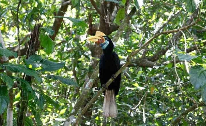 North Sulawesi Jungle