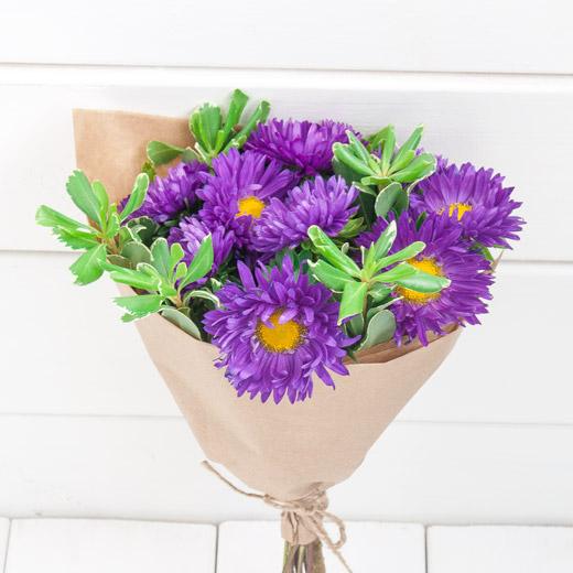 Aster Violet Flowers Moldova