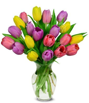 Flowers – Spring Tulip Bouquet – 20 Stems (FREE Vase Included)