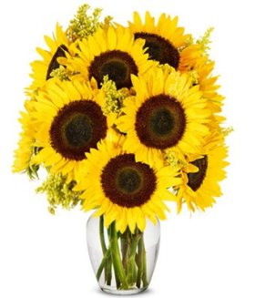 Flowers – Stunning Sunflowers – Premium (FREE Vase Included)
