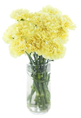 Cut Flowers – Carnation Yellow