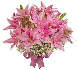 Classic Pink Asiatic Lily Toss Bouquet