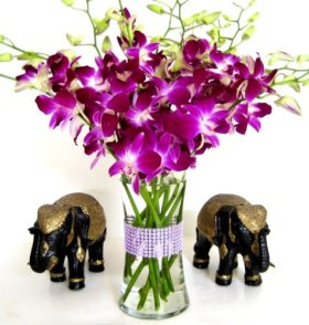 Just Orchids – Premium Long Stem Purple Dendrobium with Vase