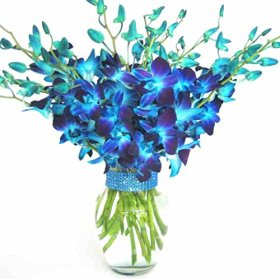 Just Orchids – 20 Blue Dendrobium Orchids with Vase w/ Rhinestone Ribbon