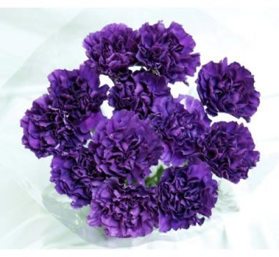 140 Fresh-cut Moonshade Purple Carnations (advance ordering recommended)