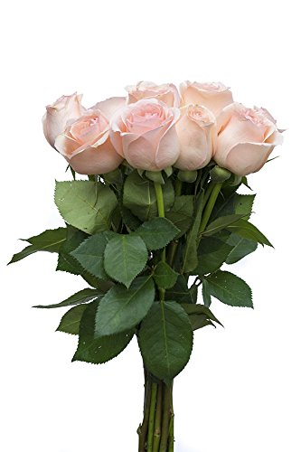36 Stems – Fresh Cut Engagement Pink Rose Bouquet from Flower Explosion.
