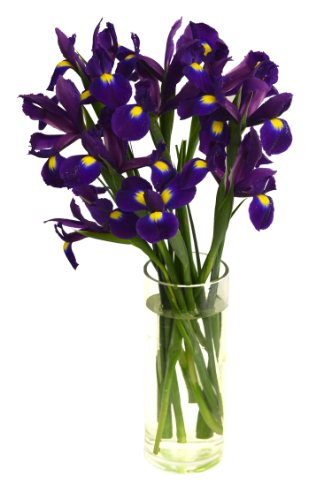 When Iris Eyes are Smiling (10 stems) – With Vase
