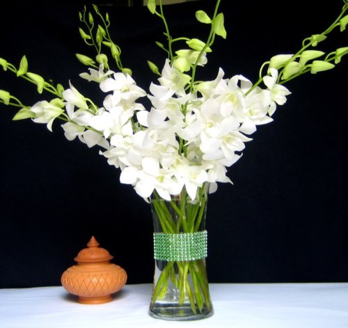 Fresh Flowers White Dendrobium Orchids with Vase