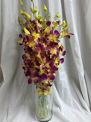 Orchid – Fresh Cut Flowers – Ten Stems of Dendrobium Sonia Tinted Yellow (Free Vase)