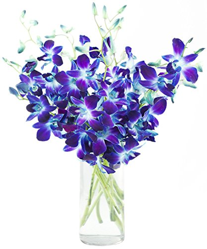 Fresh Cut Flowers – Blue Orchid with Vase