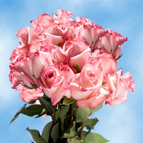 Pink Birthday Roses for Delivery – 50 Pink Roses