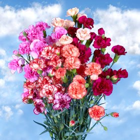 160 Mini Carnations Novelty Color