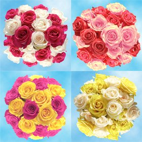 Mother's Day Flowers |50 Assorted Roses – Just Dazzling