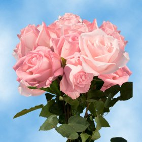 Beautiful Mother's Day Roses | 50 Pink Roses Just Gorgeous!