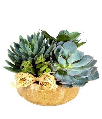 Helen – Eshopclub Same Day Flower Delivery – Fresh Flowers Plants – Wedding Flowers Bouquets – Birthday Flowers – Send Flowers – Flower Arrangements