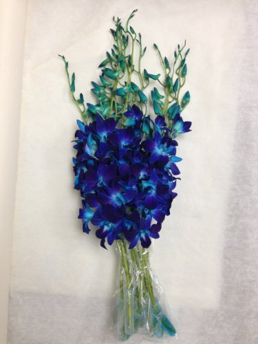 Blue Dyed Dendrobium Orchids