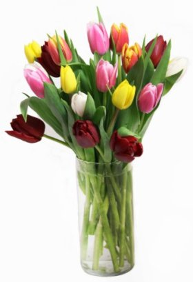 Rainbow Tulip Bouquet (20 Stems) – With Vase
