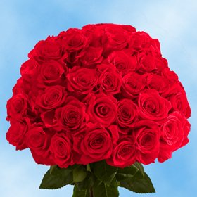 Fresh Cut Dark Red Roses | 75 Black Magic Roses Long